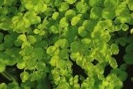 Herbstzauber pflanzen versand f r die besten winterharten balkonpflanzen k belpflanzen - Rankende zimmerpflanzen ...