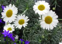 grabbepflanzung fr hjahr pflanzen versand f r die besten winterharten balkonpflanzen. Black Bedroom Furniture Sets. Home Design Ideas