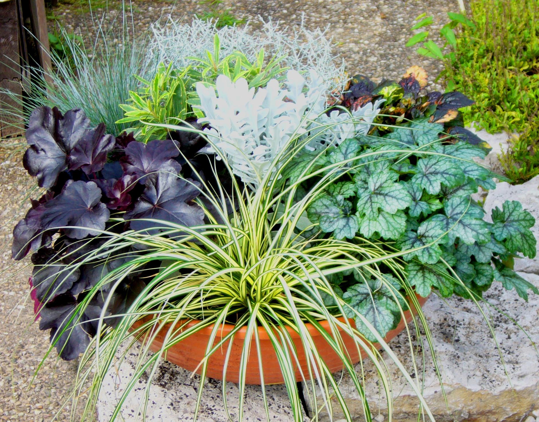 schale bepflanzt gro 45 cm pflanzen versand f r die besten winterharten balkonpflanzen. Black Bedroom Furniture Sets. Home Design Ideas