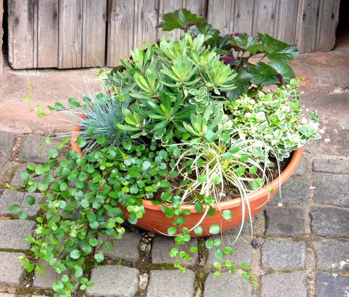 schale bepflanzt 44 cm pflanzen versand f r die besten winterharten balkonpflanzen. Black Bedroom Furniture Sets. Home Design Ideas