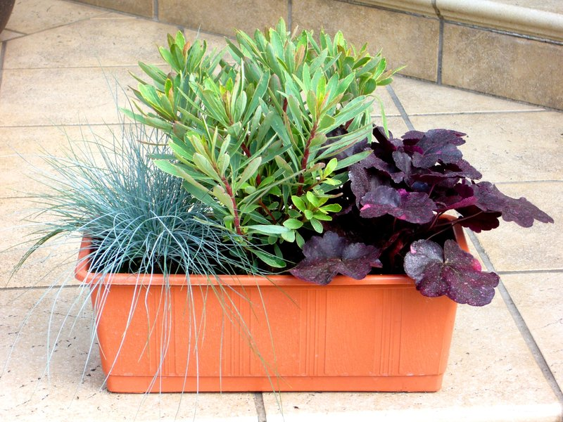 bepflanzter blumenkasten 60 cm mit sedum pflanzen. Black Bedroom Furniture Sets. Home Design Ideas