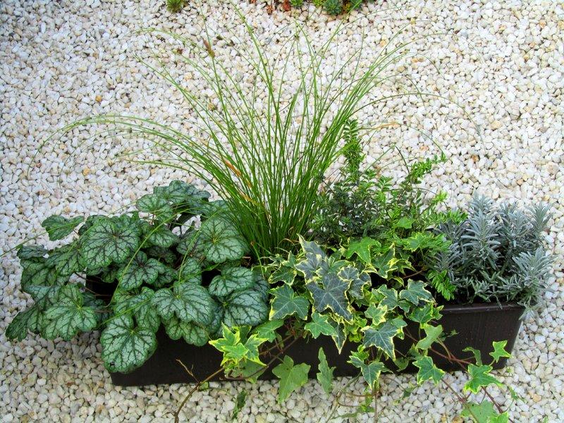 bepflanzter balkonkasten 60 x 30 wintergr n pflanzen. Black Bedroom Furniture Sets. Home Design Ideas