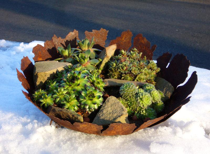 Edelrost deko schale bepflanzt mit sempervivum pflanzen for Pflanzen bestellen berlin