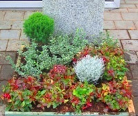 Grabbepflanzung herbst winter pflanzen versand harro 39 s - Zimmerpflanzen fur schatten ...