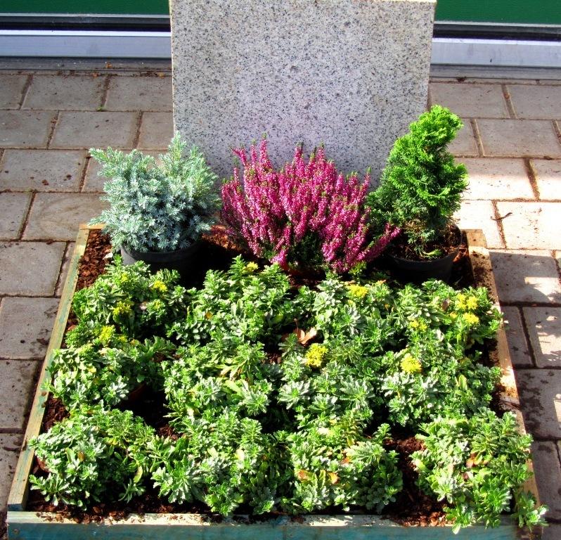 pflanzzensset urnengrab sonne pflanzen versand harro 39 s pflanzenwelt kaufen bestellen online