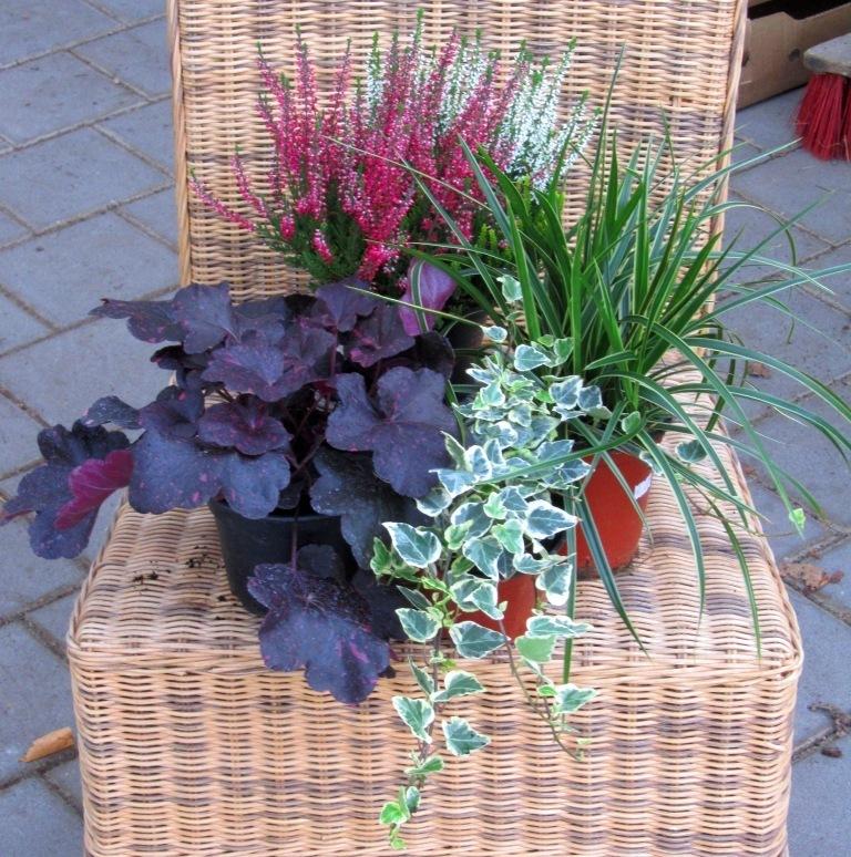 Balkonpflanzen Set Fur Balkonkasten 40 60 Cm Lang Pflanzen Versand
