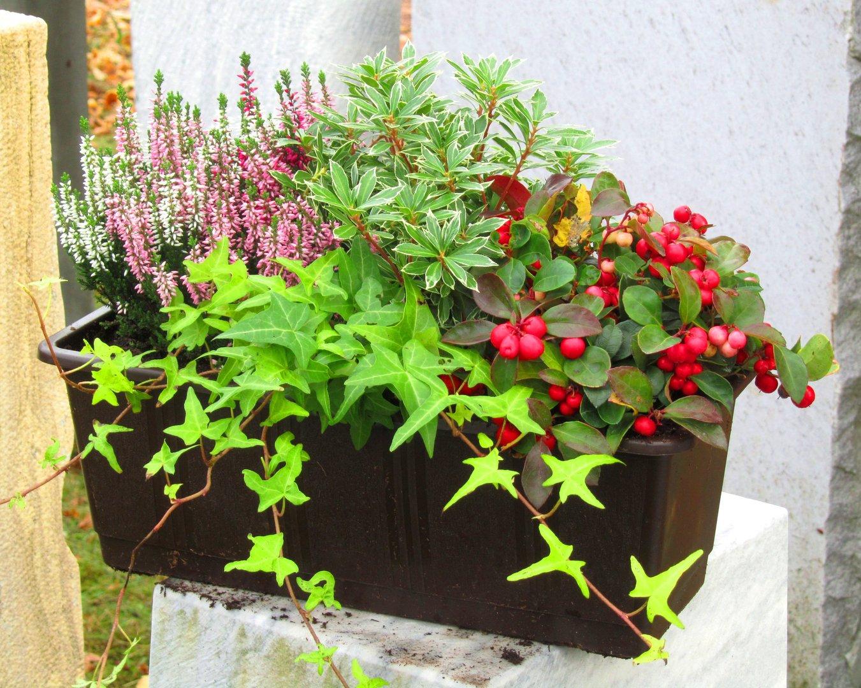bepflanzter blumenkasten 40 cm wintergr n pflanzen versand f r die besten winterharten. Black Bedroom Furniture Sets. Home Design Ideas