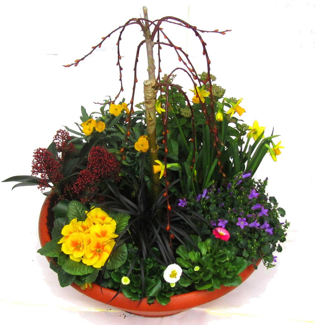 pflanzen set f r schale und k bel gro fr hling pflanzen versand f r die besten winterharten