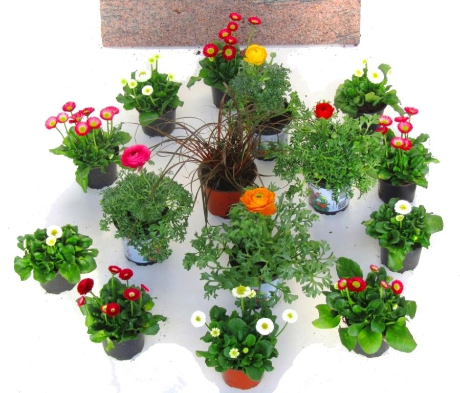 Grabbepflanzung Fruhling Pflanzenset Kreis Kaufen Im Onlineshop Grab
