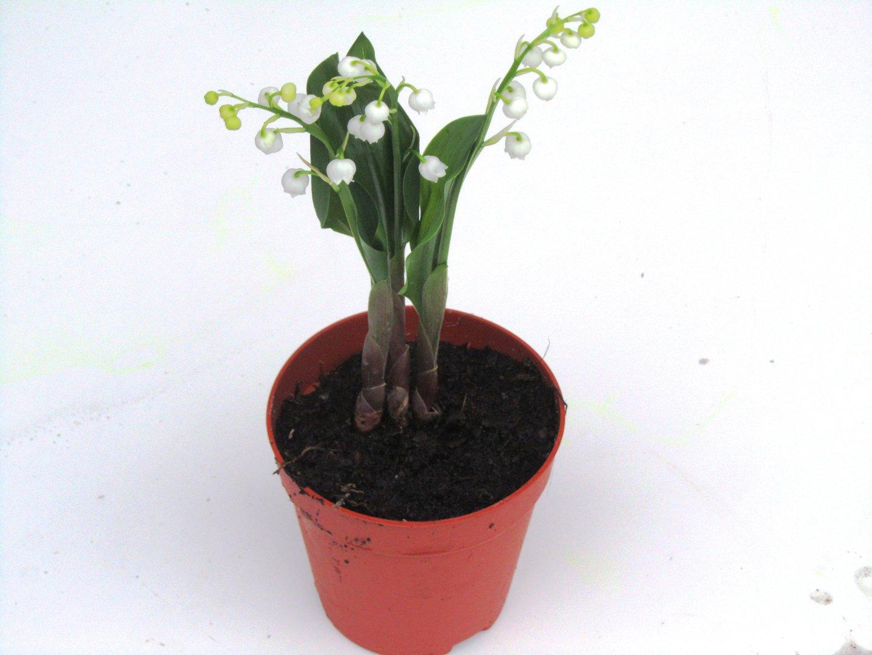 Pflanzen online versand bepflanzter balkonkasten 60 cm for Zimmerpflanzen versand