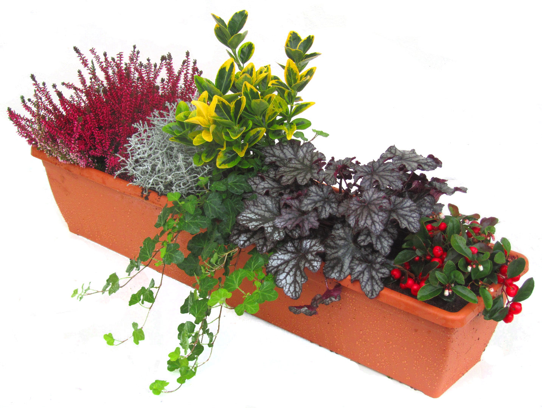 Balkonpflanzen set pflanzen versand harro 39 s pflanzenwelt for Balkonkasten winterhart bepflanzen