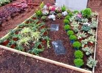 pflanzzensset doppelgrab sonne pflanzen versand harro 39 s. Black Bedroom Furniture Sets. Home Design Ideas