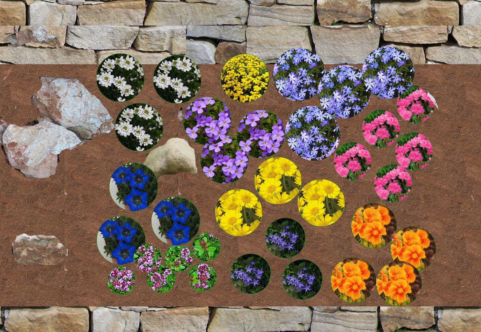 pflanzenpaket f r steinbeet pflanzen versand harro 39 s pflanzenwelt kaufen bestellen online. Black Bedroom Furniture Sets. Home Design Ideas