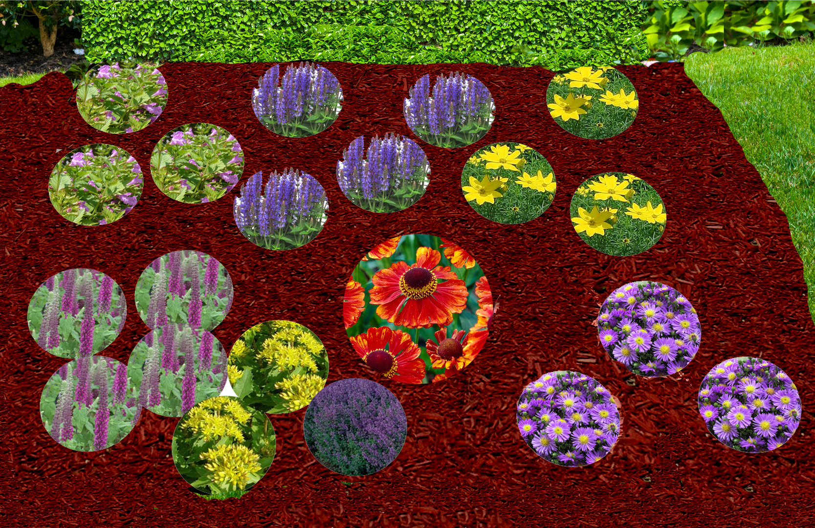 Pflanzenset staudenbeet bienen 3 4 m pflanzen versand for Versand zimmerpflanzen