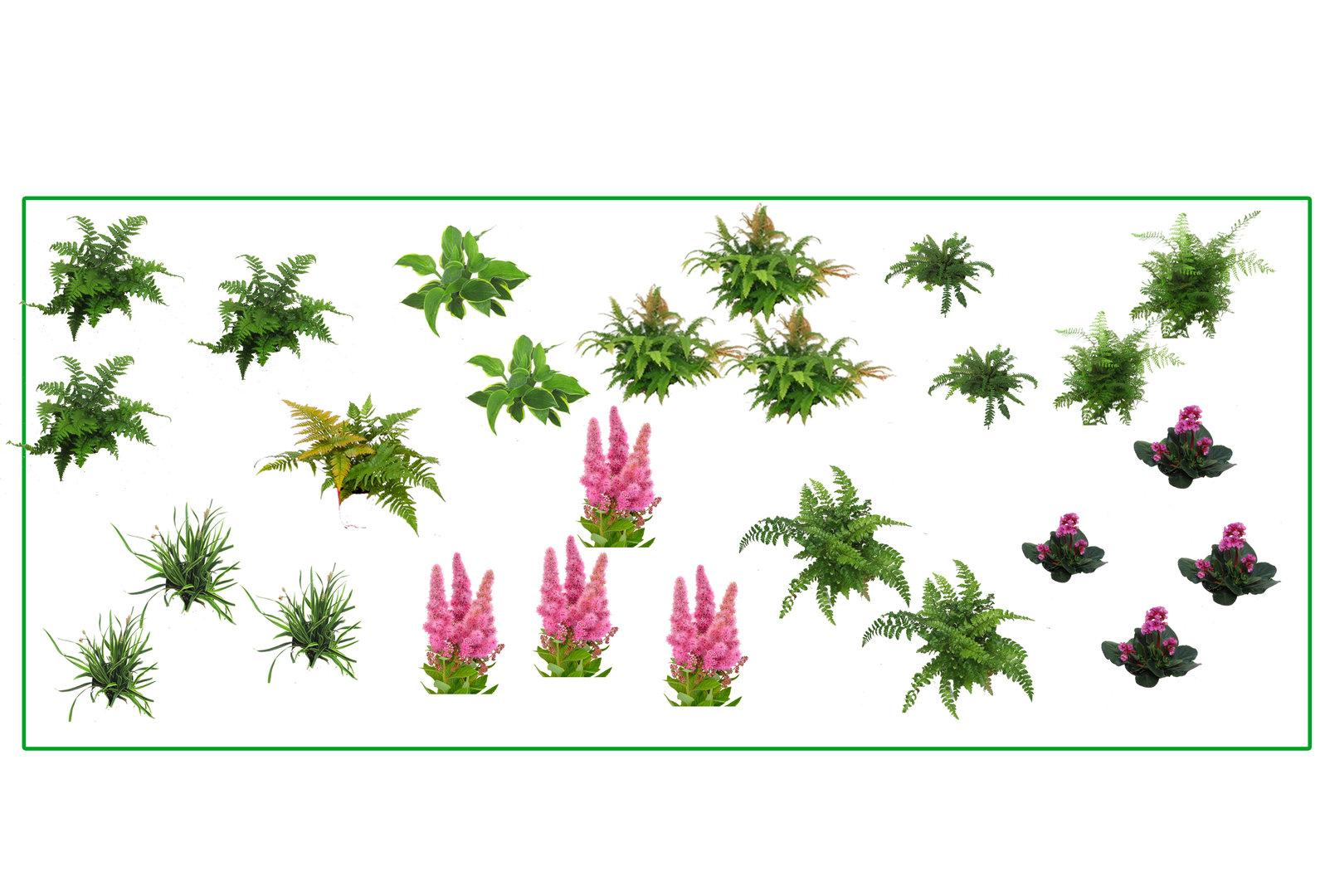 pflanzenset schattengarten ein farnenbeet f r ca 6 m f r halbschattige bis schattige lagen. Black Bedroom Furniture Sets. Home Design Ideas