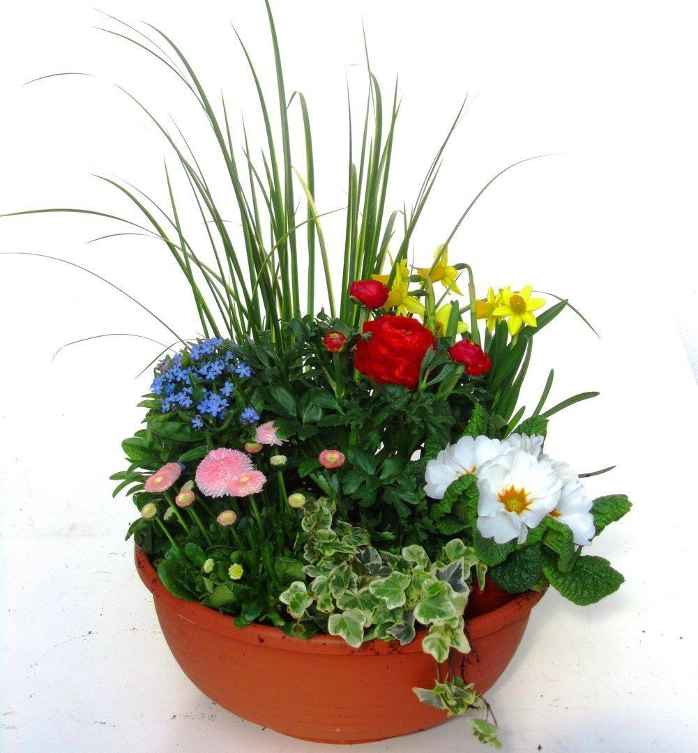 bepflanzte fr hlingsschale 30 cm