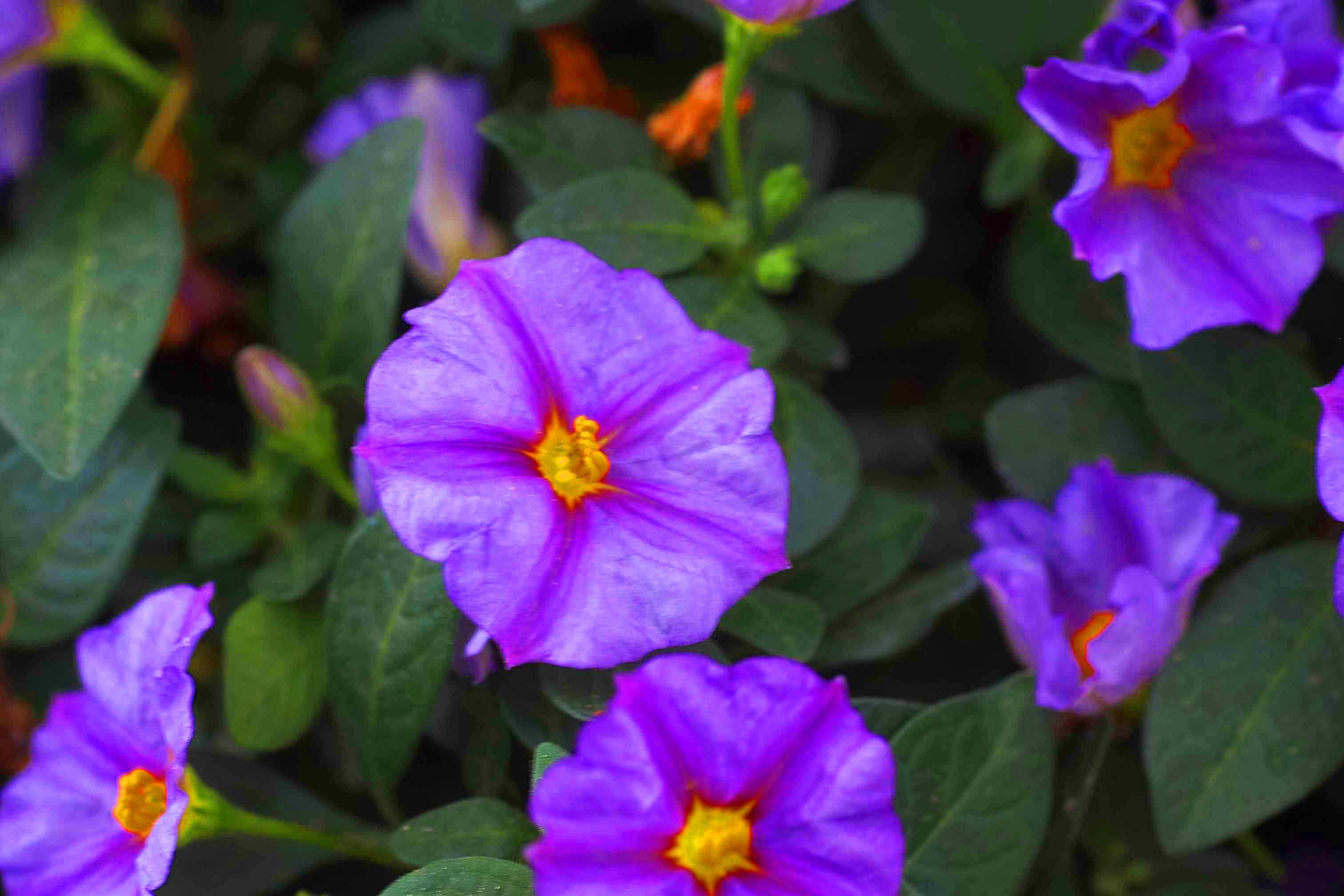 Sommerflor bilder pflanzen versand f r die besten for Pflanzen versand