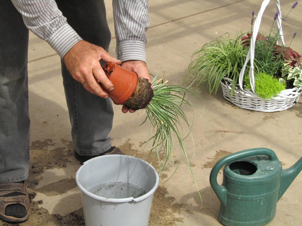 pflanzanleitung herbstzauber pflanzen versand f r die besten winterharten balkonpflanzen. Black Bedroom Furniture Sets. Home Design Ideas