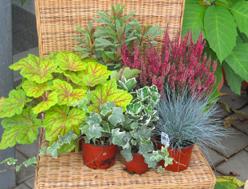 pflanz sets pflanzen versand harro 39 s pflanzenwelt kaufen. Black Bedroom Furniture Sets. Home Design Ideas