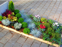 grabbepflanzung online kaufen beispiele zum selbst pflanzen pflanzenversand harro 39 s pflanzenwelt. Black Bedroom Furniture Sets. Home Design Ideas