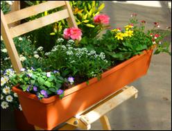 pflanzen versand harro 39 s pflanzenwelt kaufen bestellen. Black Bedroom Furniture Sets. Home Design Ideas