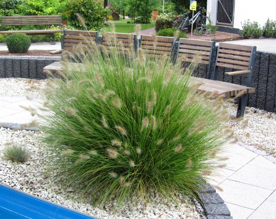 Winterfeste Gräser gräser winterhart pflanzen versand harro s pflanzenwelt kaufen