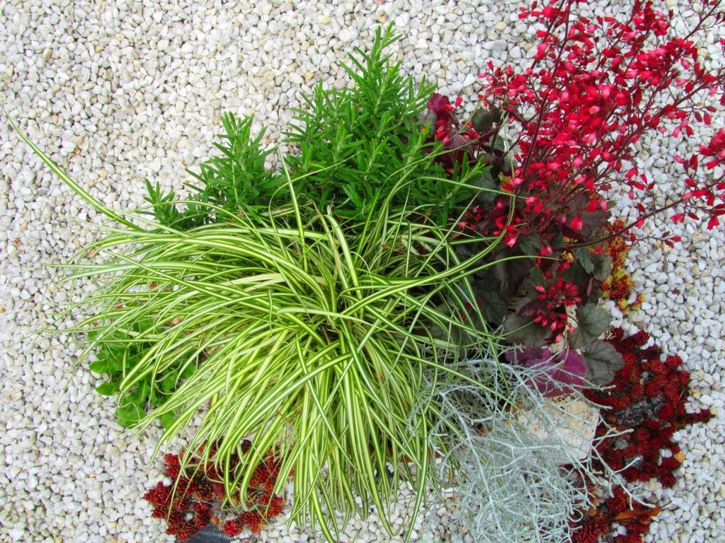 schale bepflanzt 38 cm pflanzen versand f r die besten winterharten balkonpflanzen. Black Bedroom Furniture Sets. Home Design Ideas