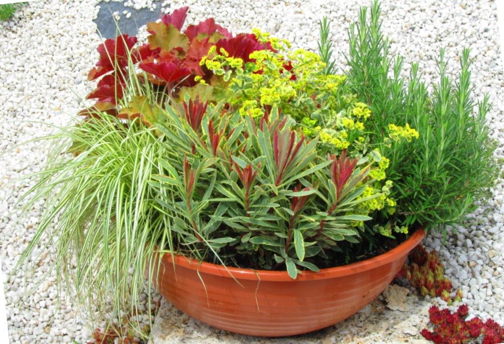 Schale bepflanzt 40 cm pflanzen versand f r die besten for Versand zimmerpflanzen