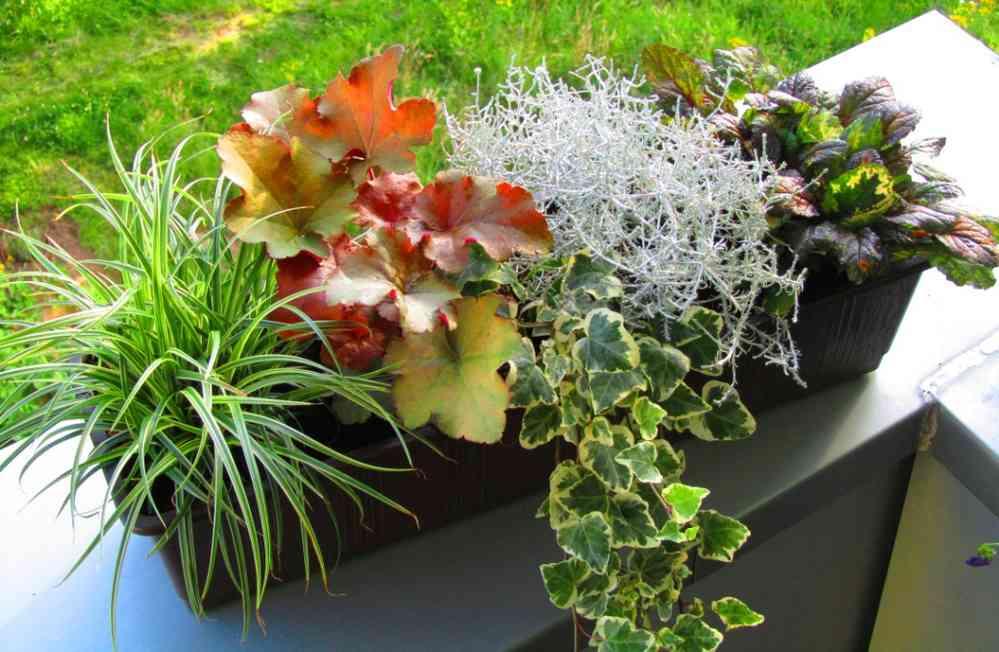 Berühmt Bepflanzter Blumenkasten 60 cm wintergrün im Bewässerungskasten &HI_61