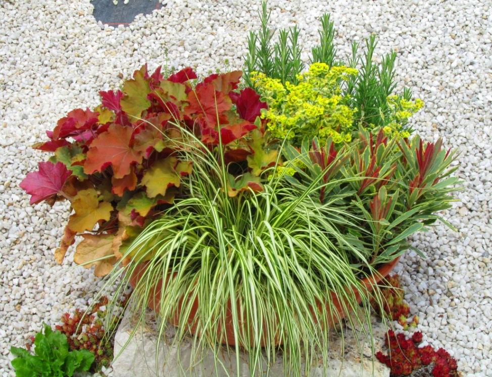 schale bepflanzt 35 cm mit bl hender sommerbepflanzung. Black Bedroom Furniture Sets. Home Design Ideas