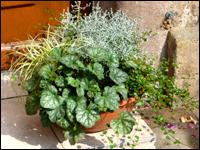 schale bepflanzt gro 45 cm pflanzen versand f r die. Black Bedroom Furniture Sets. Home Design Ideas