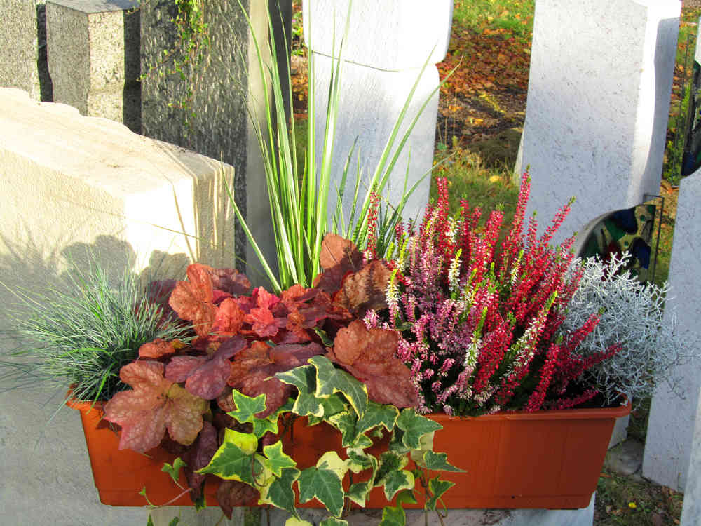 Berühmt Bepflanzter Balkonkasten 60 cm wintergrün im Bewässerungskasten &JO_55