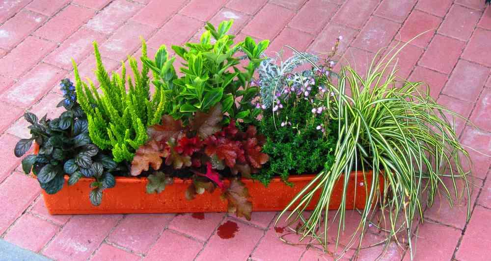 Bepflanzter Balkonkasten 80 Cm Wintergrun Im Bewasserungskasten