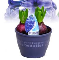 Zwiebelblumen Pflanzen Versand Fur Die Besten Winterharten