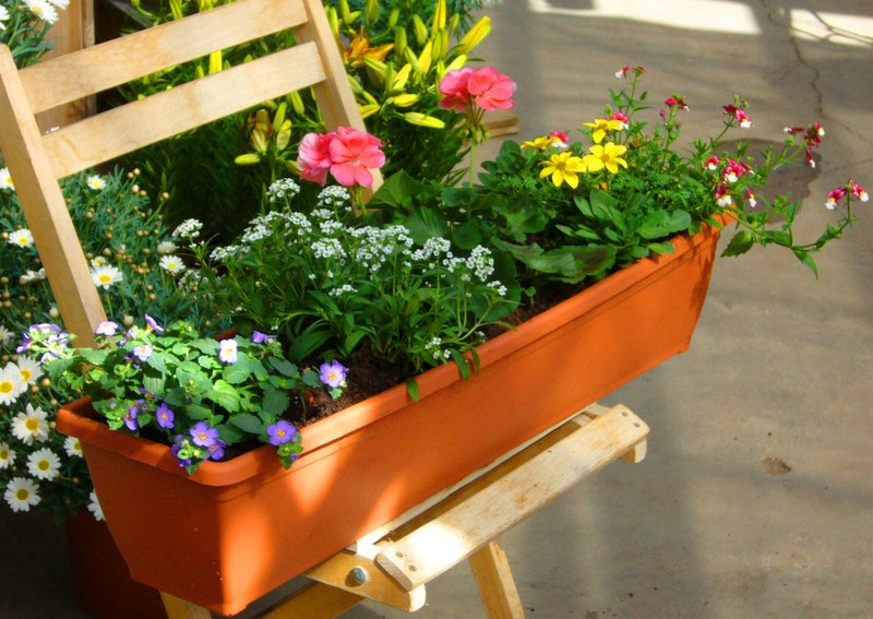 bepflanzter sommerflor balkonkasten bunt in 3 gr en. Black Bedroom Furniture Sets. Home Design Ideas