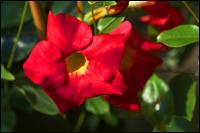 Balkonpflanzen Schatten Online Kaufen Kraftige Pflanzen