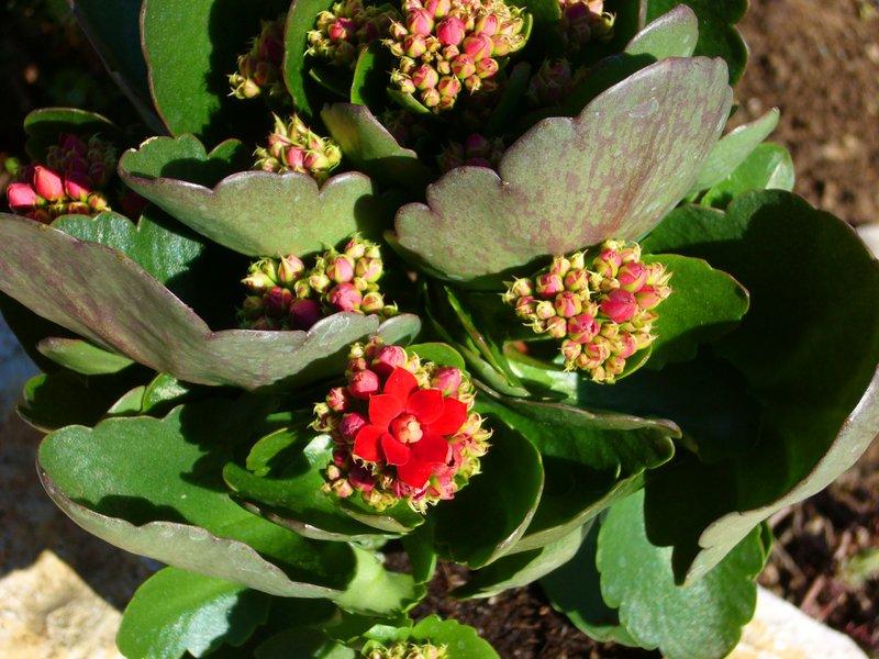 Pflanzen Versand Harro's