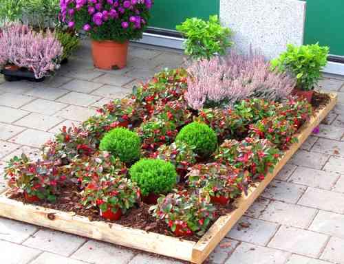 pflanzzensset einzelgrab schatten pflanzen versand harro. Black Bedroom Furniture Sets. Home Design Ideas