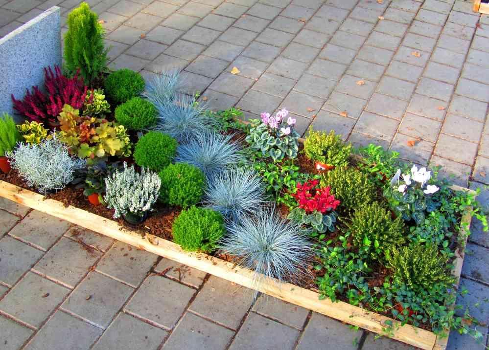 Pflanzzensset Einzelgrab Sonne Pflanzen Versand Harro S