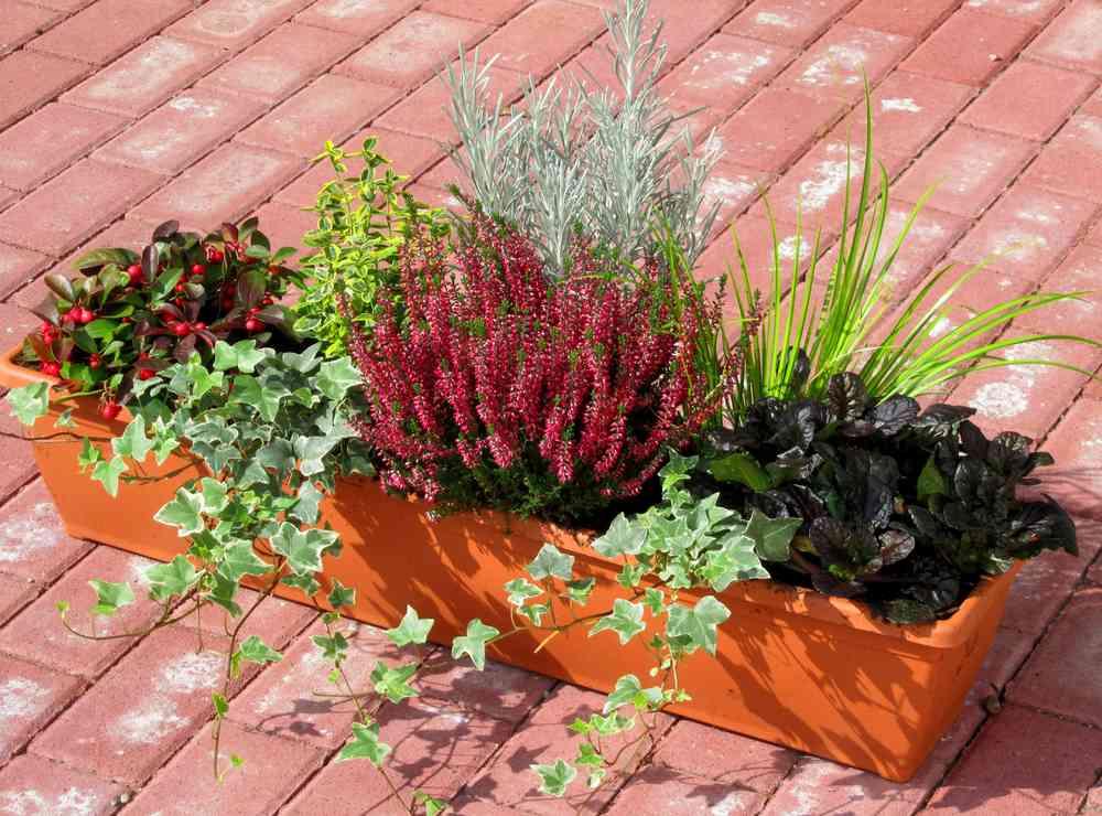 Geliebte Bepflanzter Balkonkasten 80 cm wintergrün im Bewässerungskasten &LY_65