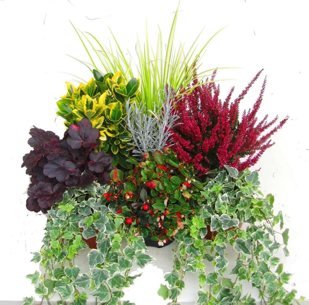 Pflanzen Set für Balkonbepflanzung 80 cm Pflanzen Versand