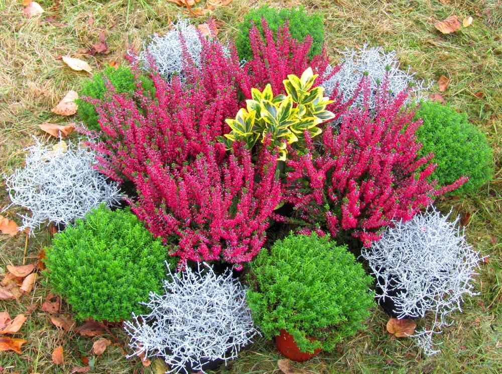 Grabbepflanzung Einzelgrab Wechselbepflanzung Herbst Winter