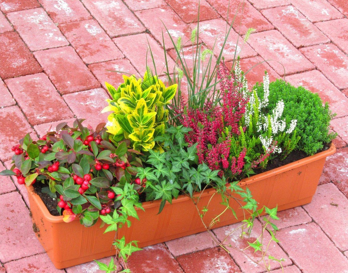 balkonpflanzen set f r balkonkasten 60 cm lang pflanzen versand f r die besten winterharten. Black Bedroom Furniture Sets. Home Design Ideas