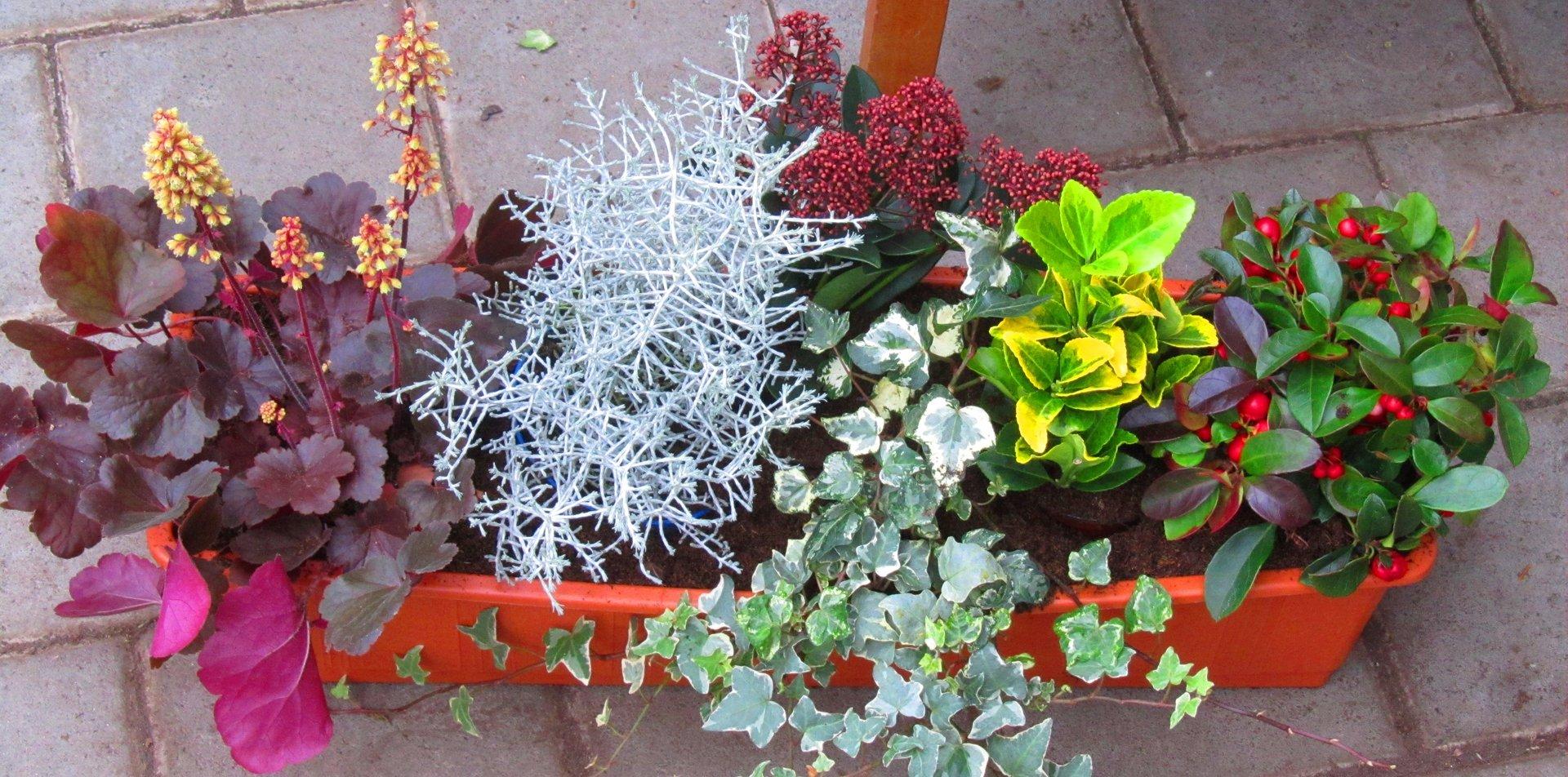 Balkonpflanzen Set Fur Balkonkasten 60 Cm Lang Pflanzen Versand