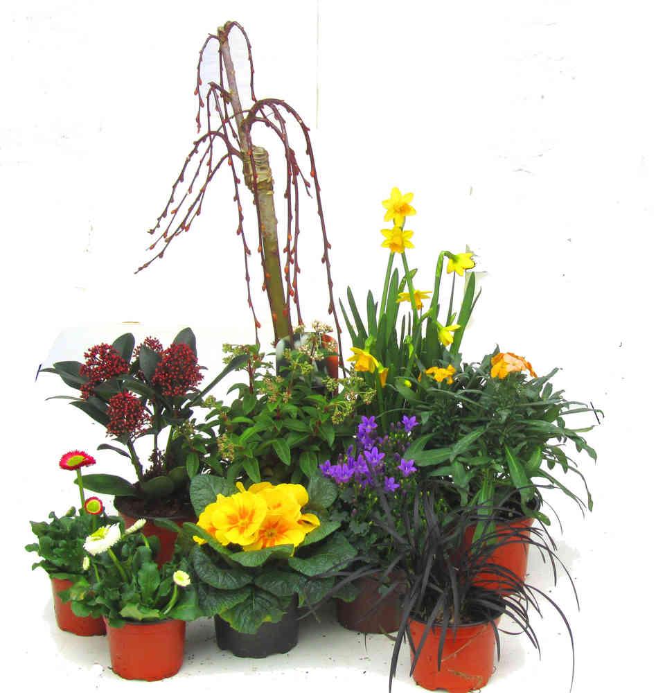 Pflanzen Set Fur Schale Und Kubel Gross Fruhling Pflanzen Versand