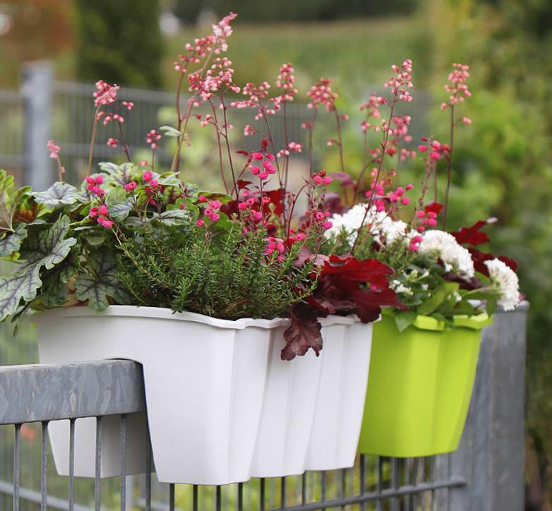 Gelander Balkonkasten Crown Kaufen Bestellen Online Im Pflanzenshop