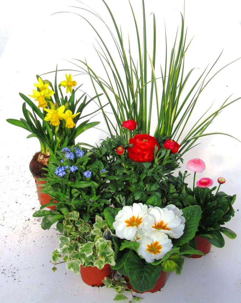 Pflanzen Set Fur Schale Und Kubel Pflanzen Versand Harro S