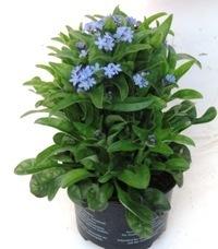 grabbepflanzung fr hjahr pflanzen versand f r die besten. Black Bedroom Furniture Sets. Home Design Ideas