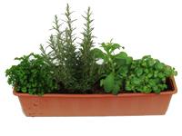 Bepflanzte Balkonkästen Pflanzen Versand Harros Pflanzenwelt