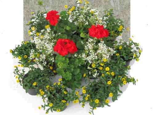 grabbepflanzung pflanzsets pflanzen versand f r die besten winterharten balkonpflanzen. Black Bedroom Furniture Sets. Home Design Ideas